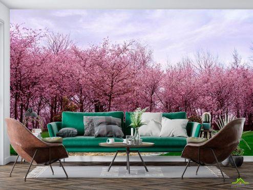Фотообои Природа по выгодной цене Фотообои Цветущие вишни
