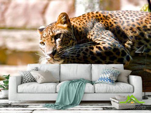 Гепарды Фотообои Мечтающий гепард