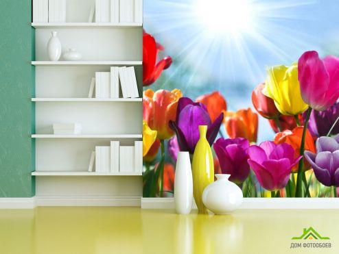 Тюльпаны Фотообои Разноцветные тюльпаны купить