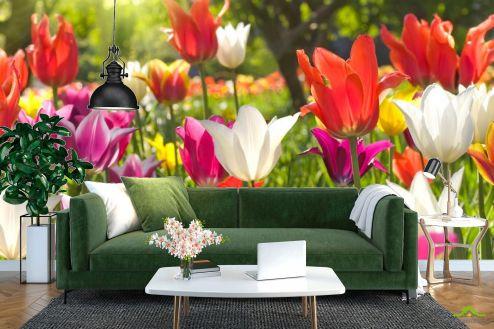 Тюльпаны Фотообои Остроконечные тюльпаны