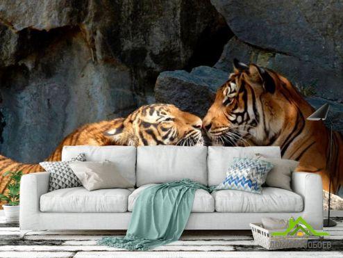 Тигры Фотообои Нежность тигров