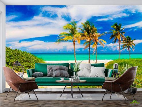 Пальмы Фотообои Пальмы на море