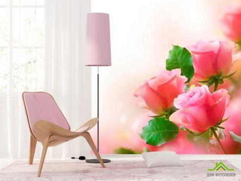 обои Розы Фотообои Нежные розовые бутоны