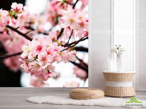 Вишня Фотообои Соцветия вишни