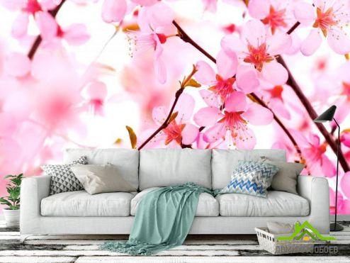 обои Цветы Фотообои Вишневые цветки распустились