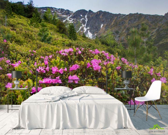 Фотообои цветы на поляне в горах