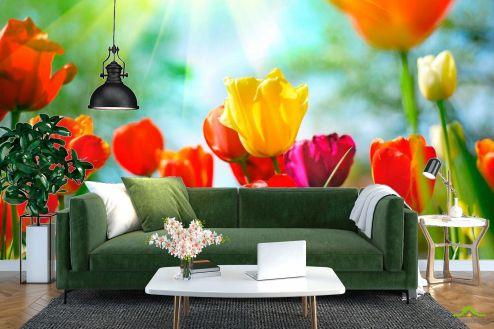 Тюльпаны Фотообои Тюльпаны разноцветные  купить