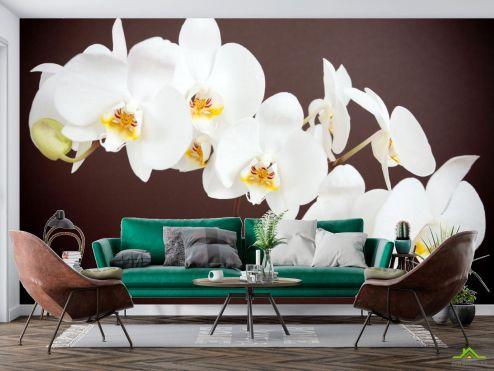 Орхидеи Фотообои белая орхидея