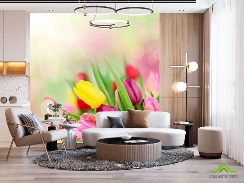 Тюльпаны Фотообои Тюльпаны разных цветов купить