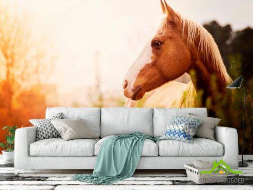 обои Лошади Фотообои Лошадь среди трав