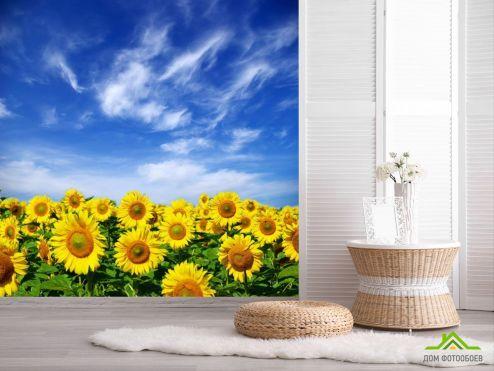 обои Природа Фотообои Подсолнухи и небо