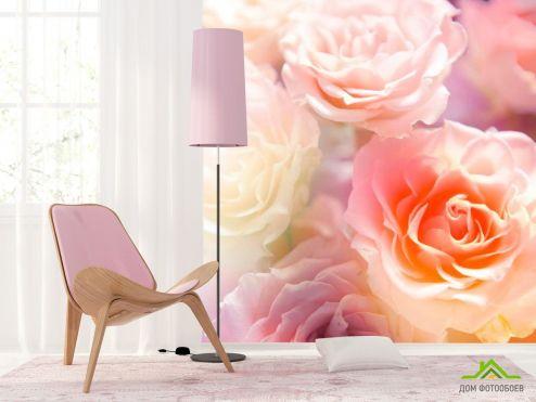 обои Цветы Фотообои Кремово-бежевые бутоны
