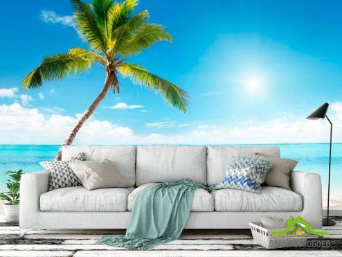 Пляж Фотообои Пальма, солнце, пляж