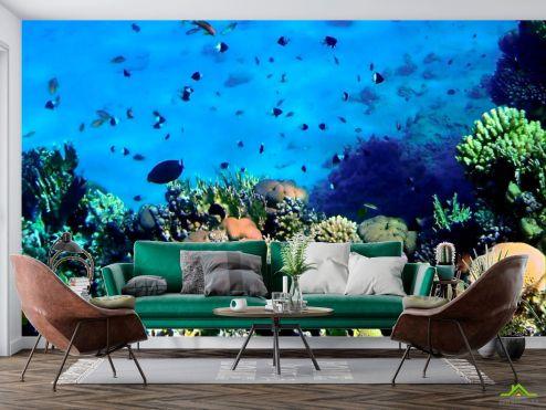 Море Фотообои Красота подводного мира