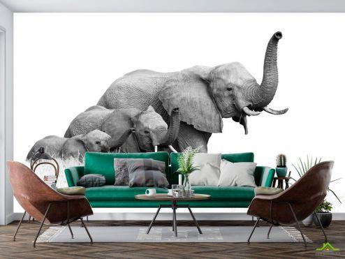 Животные Фотообои семья слонов