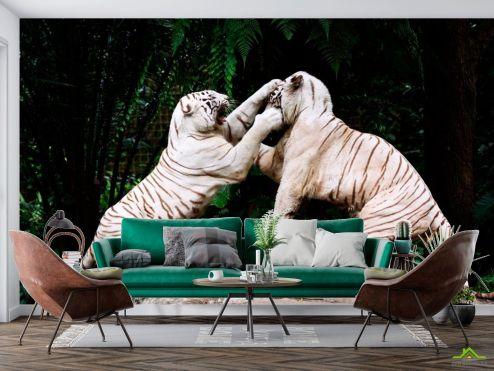 Животные Фотообои Драка белых тигров