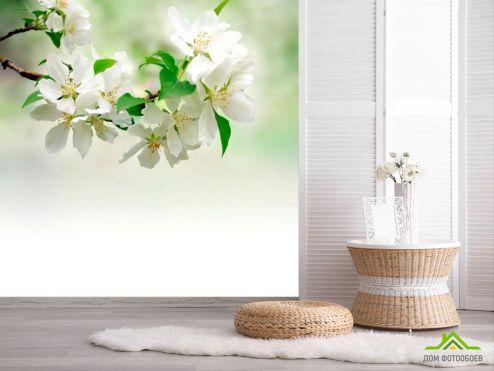 обои Абрикос Фотообои Абрикос цветет