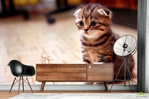 Коты Фотообои Грустный котенок