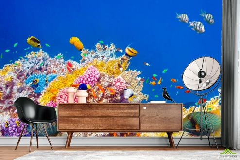 Рыбы и море Фотообои Кораллы и рыбы