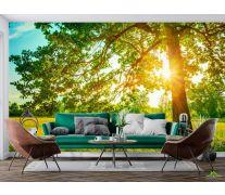 Фотообои солнце из-за дерева