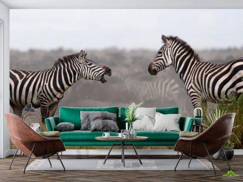 Животные Фотообои Общение зебр