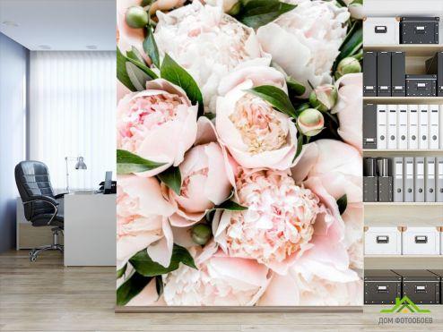 обои Цветы Фотообои Пудровые пионы
