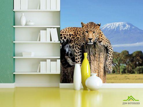 Тигры Фотообои Леопард