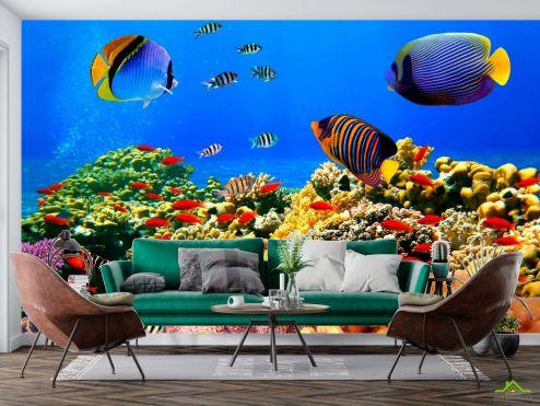 Рыбы и море Фотообои Морское дно, рыбки