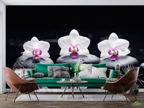 Цветы Фотообои Орхидея купить
