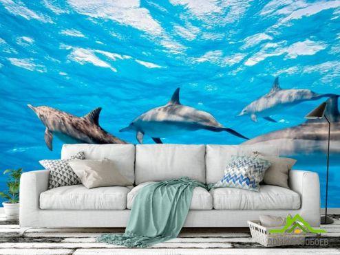 Дельфины Фотообои Игра дельфинов купить