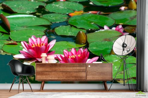 Кувшинки Фотообои Розовые кувшинки на воде