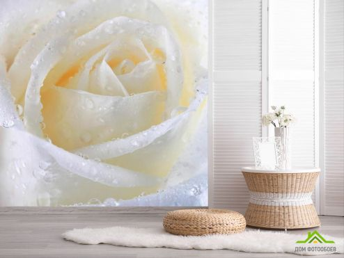 обои Розы Фотообои Роза