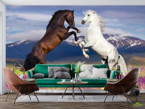Животные Фотообои белая и черная лошадь