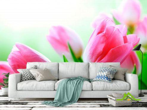 Тюльпаны Фотообои Тюльпаны в цвету