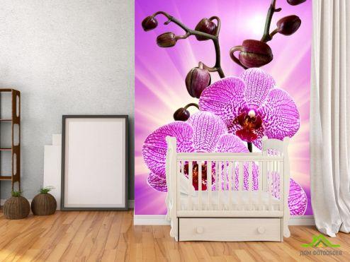 Орхидеи Фотообои леопардовая орхидея с сиянием