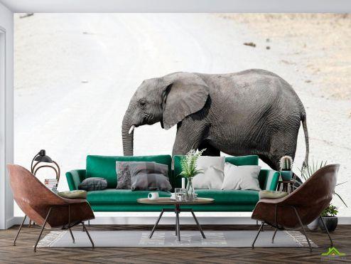 Животные Фотообои Слон в пустыне купить