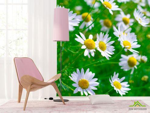 обои Цветы Фотообои Степные ромашки белоснежные
