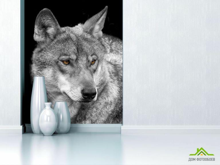 Фотообои белый волк