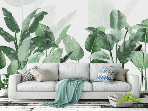 тропические листья  Фотообои Листья банана
