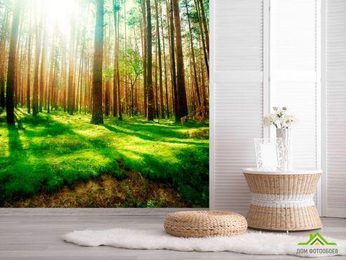обои Природа Фотообои Сосновые деревья