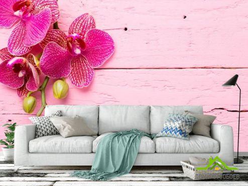 обои Орхидеи Фотообои Розовая орхидея