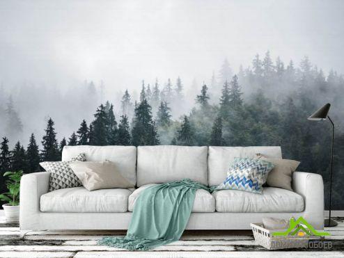 Природа Фотообои Туманный лес