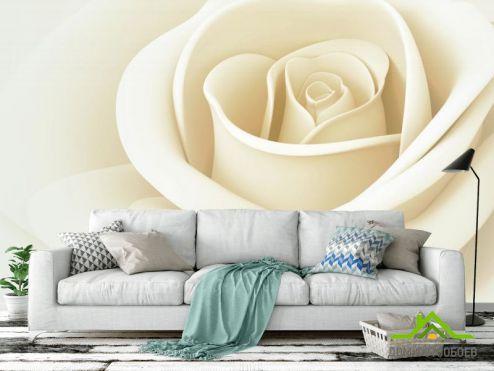Розы Фотообои белая роза