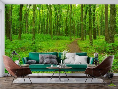 по выгодной цене Фотообои ярко-зеленый лес