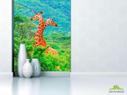 обои Животные Фотообои Жирафы среди деревьев