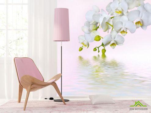 Орхидеи Фотообои белая орхидея над водой