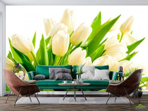 Тюльпаны Фотообои Тюльпаны купить