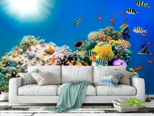 обои Рыбы и море Фотообои Рыбный косяк
