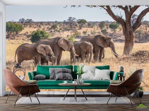 Животные Фотообои слоны и слонята