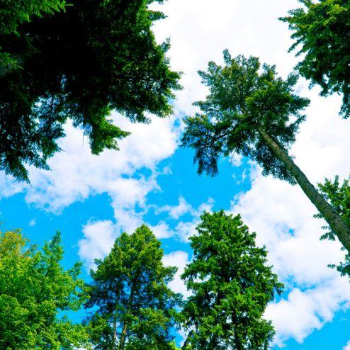 обои на потолок Фотообои Вид на деревья